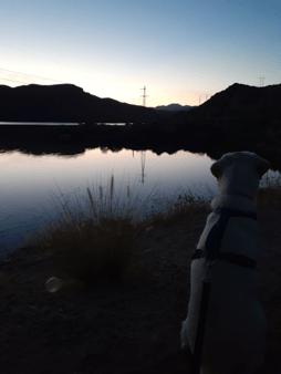 Harold by The Lake